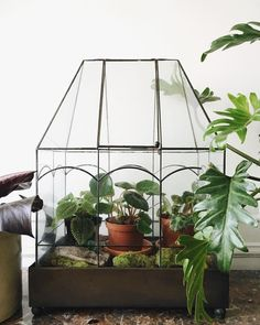 """Plant Shapes on Instagram: """"In the 12+ years I've had this wardian case, it has gone through many incarnations. First it housed tiny orchids, then ferns, and then…"""" Air Plants, Indoor Plants, Barbie Dream House, Modern House Design, Indoor Garden, Ideal Home, Bird Houses, House Plants, Planting Flowers"""