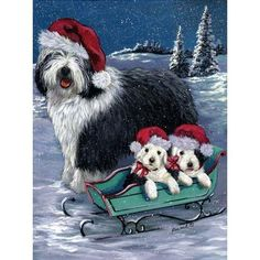find this pin and more on old english sheepdogs