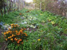 Vidéki asszony könyve az öngyógyító kiskertről   Sokszínű vidék