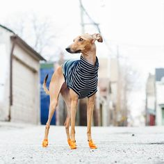 Of course I can wear orange booties that doesn't mean you should #fashionfail Turtleneck: @mister.woof
