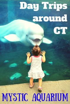 Mystic Aquarium is a must-see attraction in southeastern Connecticut.  Click the image for a review by Travel Fearlessly