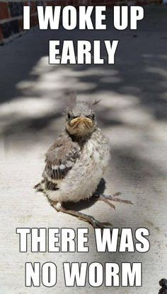 Early bird catches the...oh #funny #lol #humor