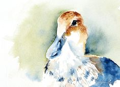 """""""Daffy"""" by Stephie Butler 