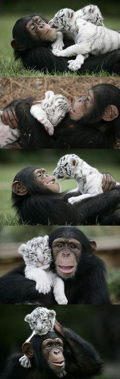 hayvanlarin aslinda ne kadar dost canlisi oldugunun 28 kaniti 19
