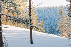 The winter is a wonderful time to enjoy the charm of the snow-coated nature of Rokua.   Rokua Health & Spa Hotel. Rokua national park, Finland.