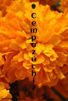 """El """"cempasúchil"""" procede de la palabra en náhuatl cempōhualxōchitl que significa """"veinte petalos"""" es tradicionalmente usada en Mexico durante el dia de los muertos para adornar altares y tumbas y en anterioridad se usaba para creat caminos de petalos desde una tumba a la casa de el difunto para ayudarle a encontrar el camino de regreso."""