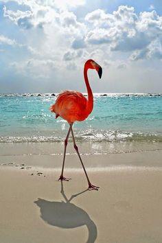 Renaissance Island, Aruba. Flamingo and shadow.