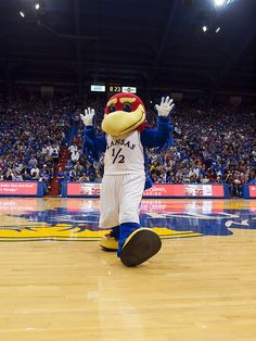 In October KU mascot Baby Jay was hatched from a giant egg on the at the Kansas Jayhawks football Homecoming game halftime. Football Homecoming, Homecoming Games, Kansas Basketball, Basketball Players, Soccer, Basketball Games, Kansas Jayhawks Football, College Football, Game Day Shirts