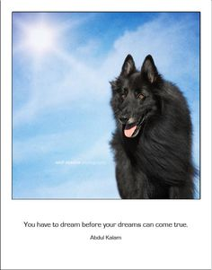 Dream...  with #WolfCub, the Belgian Shepherd.