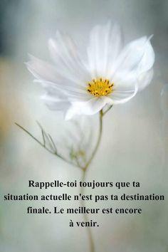 Franch Quotes : #citation #citationdujour #proverbe #quote #frenchquote #pensées #phrases #fren