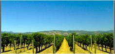 A Gourmet Guide to the Napa Valley   The 10 Best Restaurants