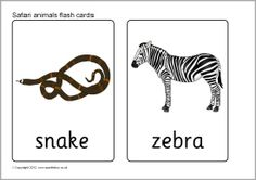 Safari animal flash cards (SB7723) - SparkleBox