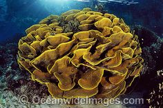 Coral Reef Stock Photos | Coral Reef Pictures Images