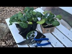 Live from my kitchen garden and polytunnel in a nordic climate. Tasting my pak choi. Countryside, Live, Day, Garden, Kitchen, Plants, Cooking, Lawn And Garden, Gardens