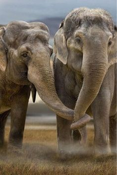 Abused in circuses, killed for tusks in the wild, nowhere is safe for these beautiful creatures