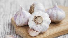 Knoblauch ist ein Allrounder. Die Knolle ist aus heimischen Küchenzum Verfeinern vieler Speisenkaum wegzudenken. Zusätzlich wird dem Lauchgewächs eine heilende Wirkung zugeschrieben. Es lohnt sich also, Knoblauch im Garten oder auf den Balkon zu...