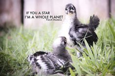 Whole Planet - French Montana rap thug art photography funny meme fine art print og lyrics hip hop gangsta art