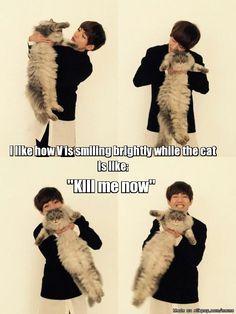 cat! :O   allkpop Meme Center