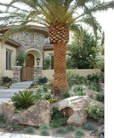 Vegas Lush - tropical - landscape - las vegas - Sage Design Studios, Inc.