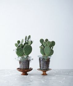 Next up on the cactus buying list.