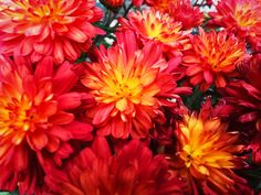 Red Flowers - free download on MMT