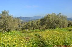 Spring in Spain Andalusia, Countryside, Vineyard, Spanish, Spring, Outdoor, Beautiful, Outdoors, Vine Yard