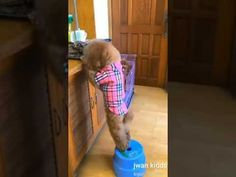 Afv Funny Videos, America's Funniest Home Videos, Funny Bets, Cute Puppies, Cute Dogs, Funny Animals, Cute Animals, Life Video, Cute Animal Videos