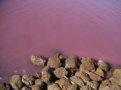 Há um lago no Senegal que fica inteiramente rosa devido às algas que absorvem luz.