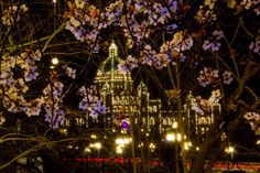 March 2/16 Parliament Buildings downtown Victoria, and spring-time cherry blossoms. Doug Clement Photography