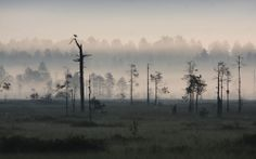Patvinsuo National Park, Finland (by Pasi Parkkinen)
