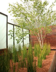 Steel & frosted glass screen with horizontal board fence and raised steel planter