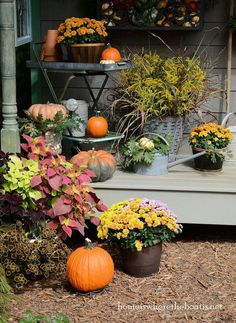 Fall Around The Potting Shed :: Hometalk