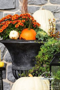 FABULOUS fall urn spilling with mums, ivy, ornamental cabbage, and pumpkins by cathy Porche Halloween, Halloween Porch, Fall Halloween, Porch Urns, Front Porch, Outside Fall Decorations, Outdoor Decorations, House Decorations, Mums In Pumpkins