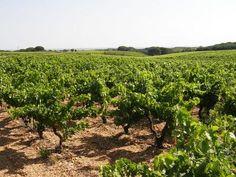Le Gard vignes dans les Costières Guide du tourisme dans le Gard Languedoc-Roussillon