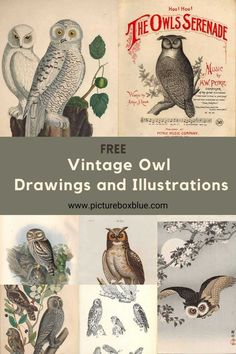 Printable Vintage Owl Drawings and Illustrations - Picture Box Blue
