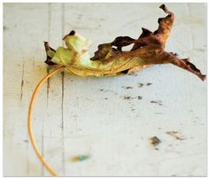 Fall от Galina на Etsy