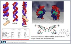 Different Conformations of DNA and Selective Binding of Enantiomers - Chemistry Steps Z Dna, Chemistry Lessons, Cell Structure, Dna Test, Different, Drugs, Taehyung, Photoshoot, Life