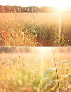 golden by hannah * honey & jam, via Flickr