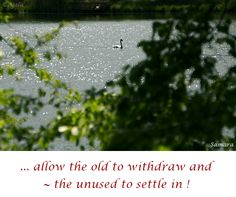 ... allow the #old to withdraw and ~ the #unused to settle in !