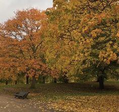Best Seasons, Four Seasons, Autumn Scenery, Foggy Morning, Autumn Aesthetic, Autumn Cozy, Rainy Season, Architecture Old, We Fall In Love