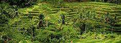 Circuit INDONESIE, BALI AUTHENTIQUE - Les Covoyageurs