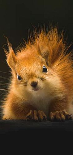 About Wild Animals: A cute squirrel Nature Animals, Animals And Pets, Funny Animals, Squirrel Pictures, Cute Animal Pictures, Beautiful Creatures, Animals Beautiful, Regard Animal, Cute Squirrel