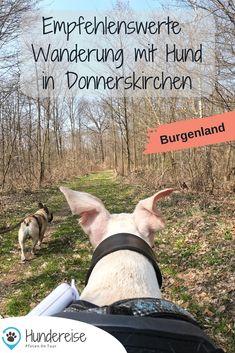 Wander App, Kaiser Franz Josef, Kirchen, Animals, Animals Dog, Cats, Hiking With Kids, Trench, Animales