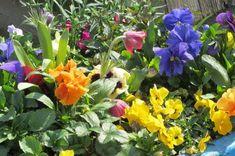 Zapraszamy do spacerów po kwitnących Ogrodach Kapias