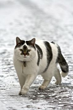 kitty- ahhh cute face!