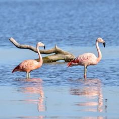 Colores celeste y rosa para otra postal de la provincia de Córdoba. Colores de una laguna y de una especie de aves rara pero hermosa.