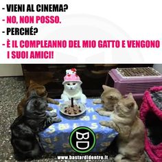 Rinunceresti a un evento del genere? Cutest Animals On Earth, Animals And Pets, Cute Animals, I Love Cats, Crazy Cats, Funny Facts, Funny Memes, Funny Cute, Hilarious