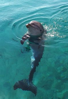 Dolphin Reef - Eilat, Israel. I would love to go here some day