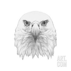 Portrait of Eagle. Hand Drawn Illustration. Art Print by victoria_novak at…