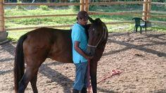 Flexiones del cuello Horses, Natural, Animals, Bending, Animales, Animaux, Horse, Animal, Animais